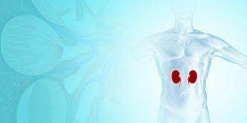 Hansa Medical kidneys