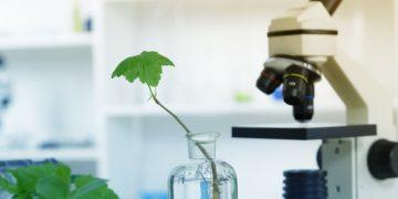 BASF Broad institute CRISPR-CPF1