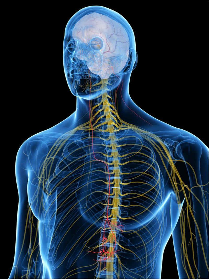 silk biomaterials nerve repair nervous system