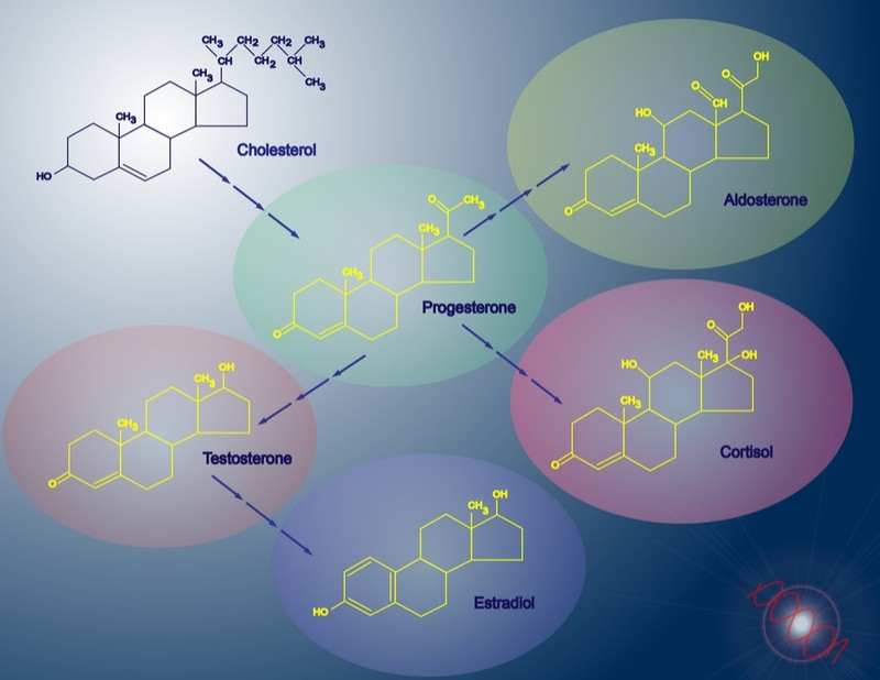 Cortisol hormone therapy - synthesis