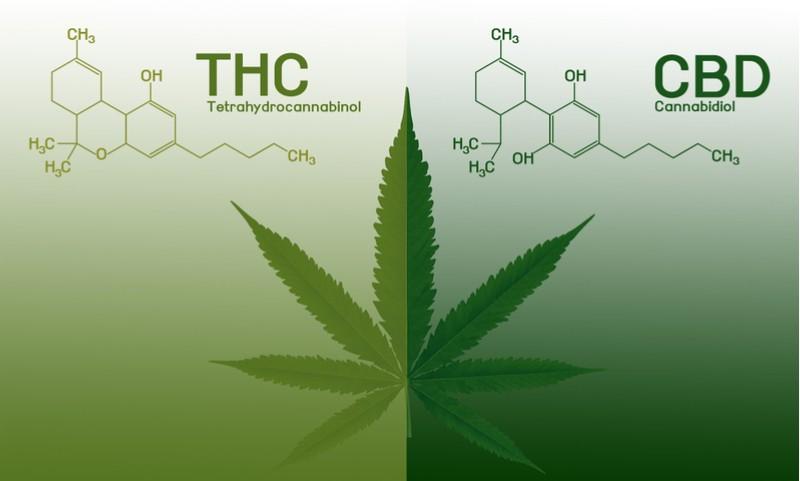 Medical cannabis GW THC CBD