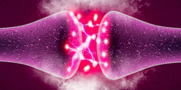 Pharnext genetic nerve disorder neuron synapse