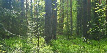 tree bark finland forest header