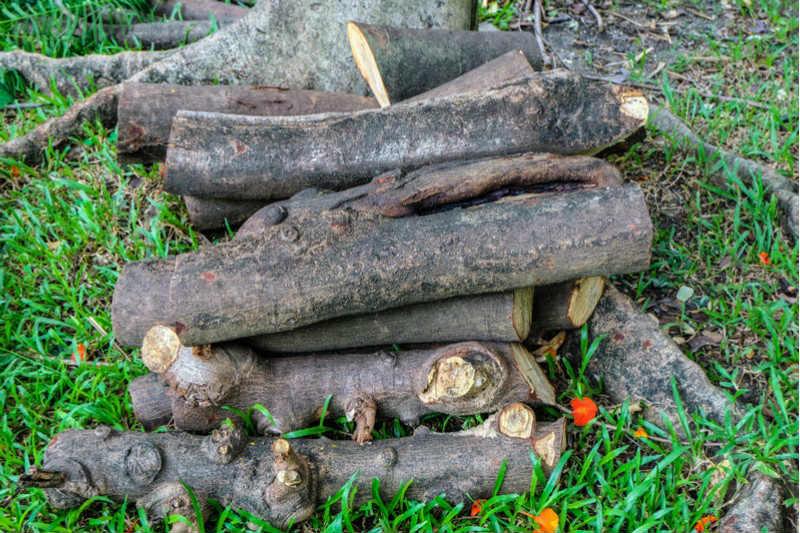 tree bark finland tannin