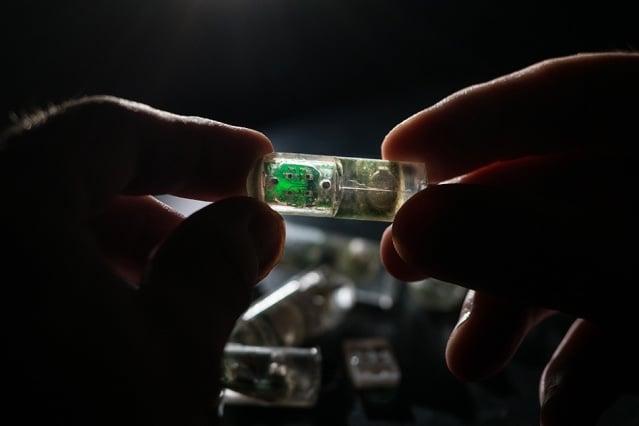 MIT bacteria on chip biosensor