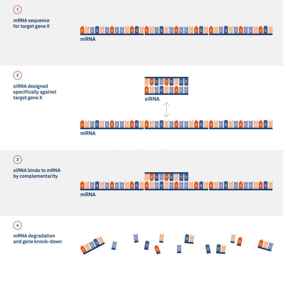 RNAi - Silence Therapeutics