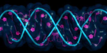 RNAi feature header - RNAi molecule