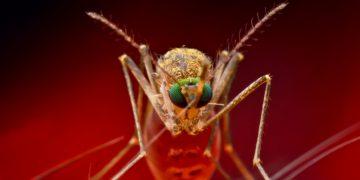 chikungunya virus mosquito Themis bioscience