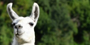 argenx llama-inspired antibodies cover cancer immunotherapy