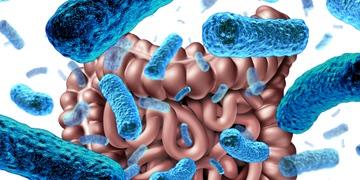 maat pharma microbiome therapy cancer