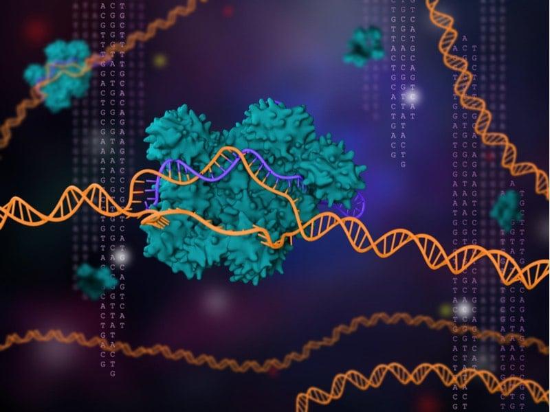 Oxford Genetics - pic 2 - CRISPR
