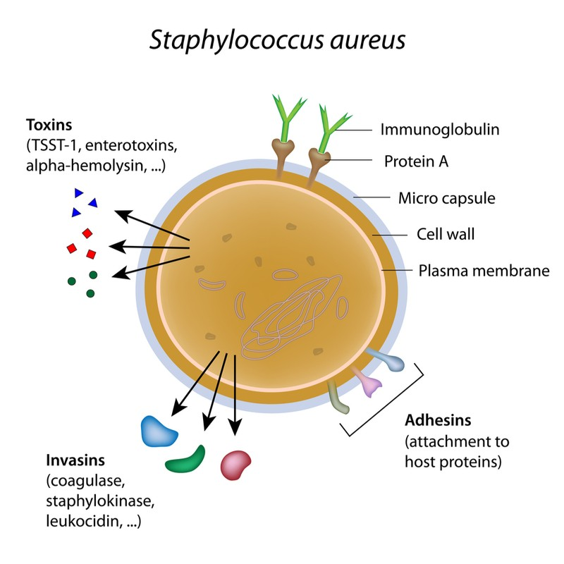 destiny pharma mrsa antibiotic resistance membrane