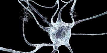 picometrics technologies Huntington's disease neuron