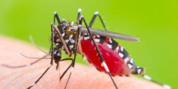 valneva chikungunya mosquito tropical
