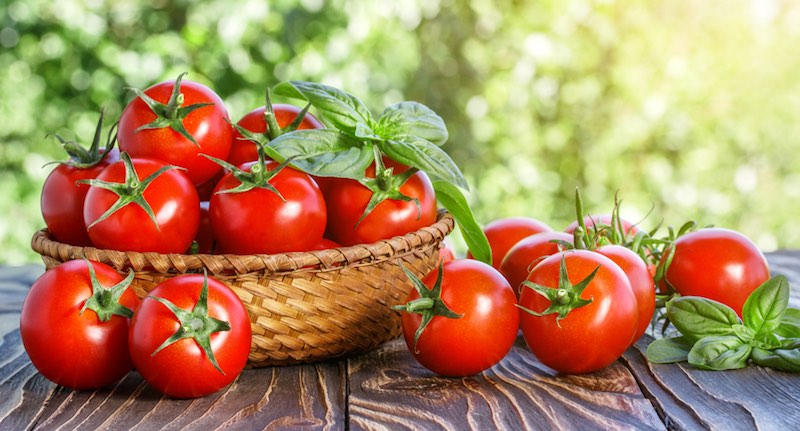 CRISPR applications tomato
