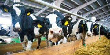 glanbia ireland agrichemwhey dairy whey biorefinery