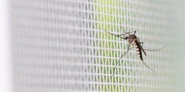 glasgow university malaria origami anopheles