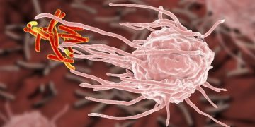 tuberculosis suicide cnrs embl Francis Crick antibiotic resistance immune