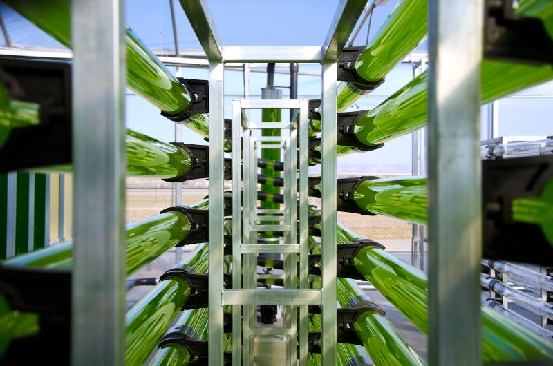 AlgaEnergy - biofuels