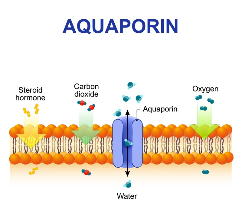 aquaporin water purification membrane