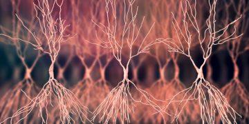 bioarctic Alzheimer's disease plaques amyloid beta neurons