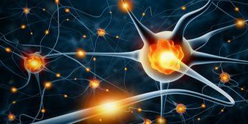 polyneuron anti-mag peripheral neuropathy autoimmune disease nerve