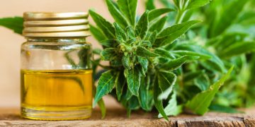 medical cannabis, Europe, Brexit, tender process, Gemany, Dentons