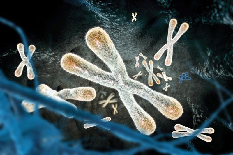 anti-aging ageX therapeutics telomere cancer