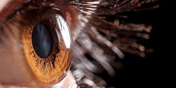 chemical burns manchester cornea stem cells
