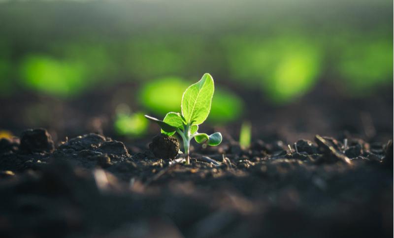 kapsera agriculture crop fertilizer microbiome