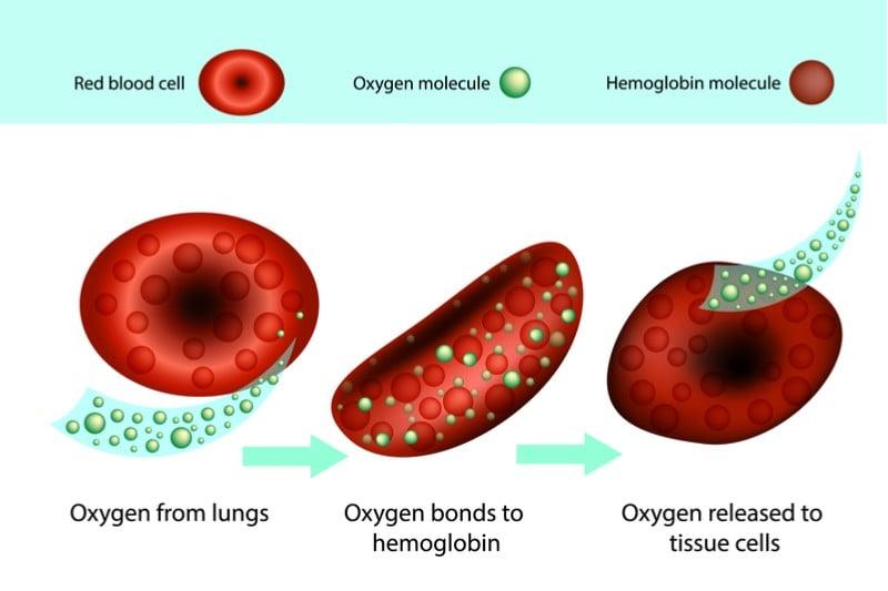orchard therapeutics beta thalassemia