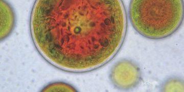 Algatech Microalgae solabia bio-source