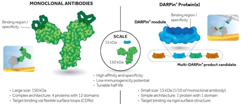 Molecular partners DARPin