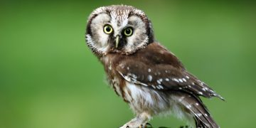 owlstone medical uk heart failure breath diagnostics