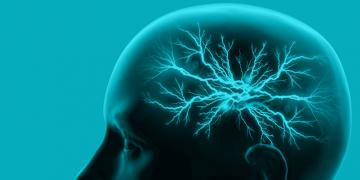 schizophrenia brain drugs antipsychotics