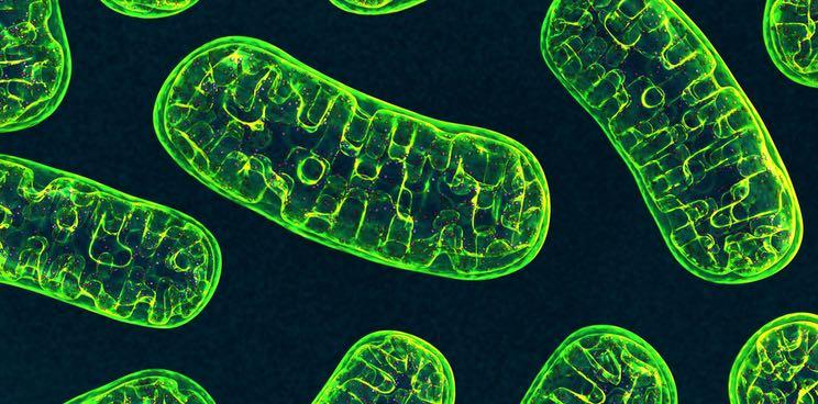 amazentis anti aging mitochondria