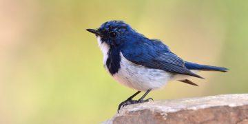 bluebird bio gene therapy beta thalassemia