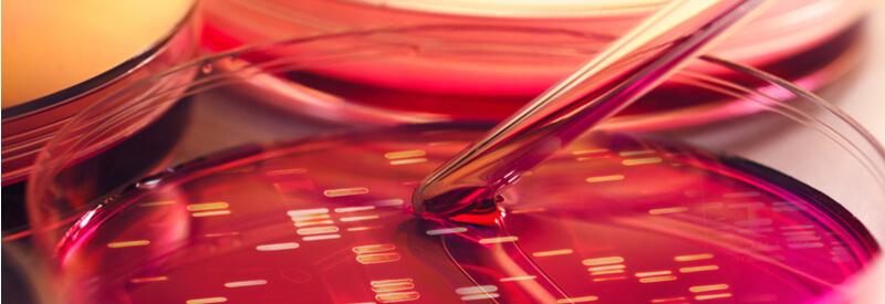 mini-pool approach, Merck, laboratory work, cell line development, clone selection