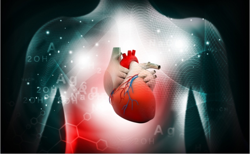 Cardiovascular disease feature - heart