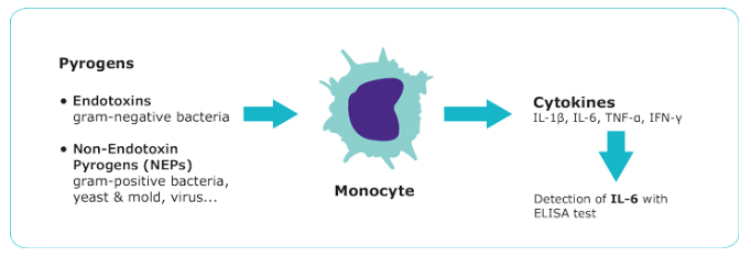 PyroMat, pyrogen detection test, cell line-based pyrogen and endotoxin testing