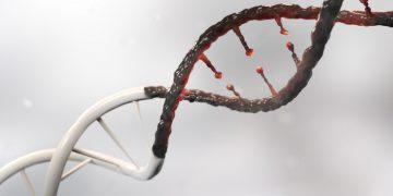 evotec dna damage repair parp inhibitor cancer