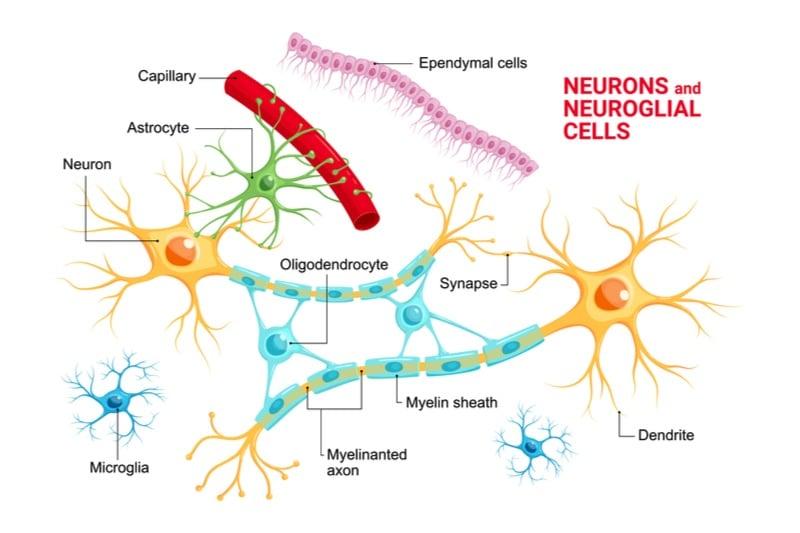 astrocyte alzheimers disease astronautx