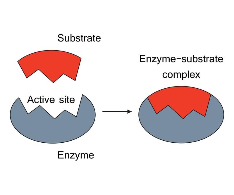 enzyme pharem biotech sweden water pollution solution