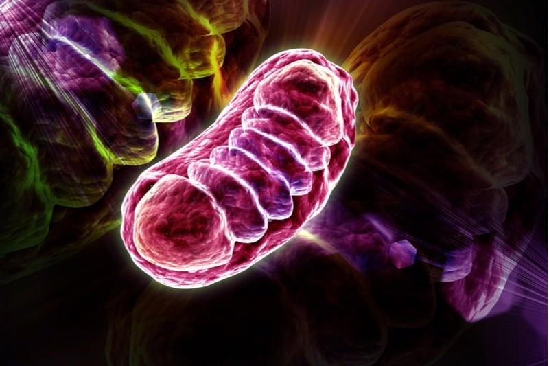 mitochondria amazentis