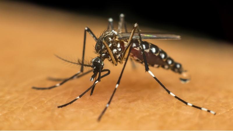 valneva vaccines chikungunya lyme disease mosquito