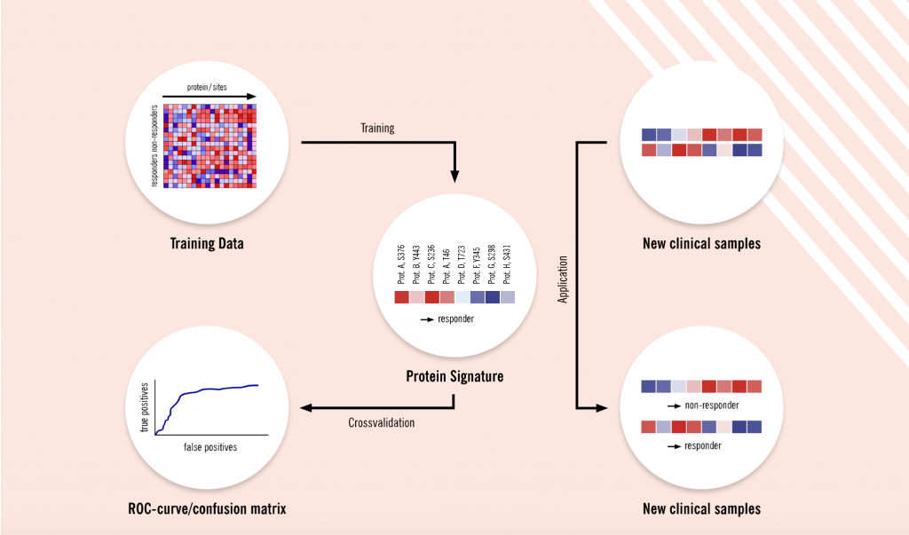 Discovery of proteomics signatures, biomarker discovery, Evotec