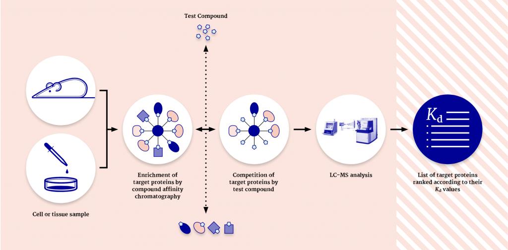 Evotec Cellular Target Profiling™ workflow
