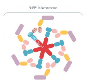inflammasomes, innate immunity, therapeutic strategies, cisbio copyright