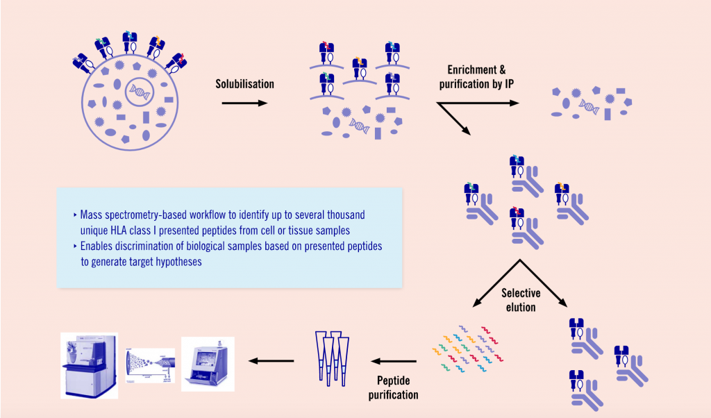 MHC Class I Peptidomics, drug discovery, evotec