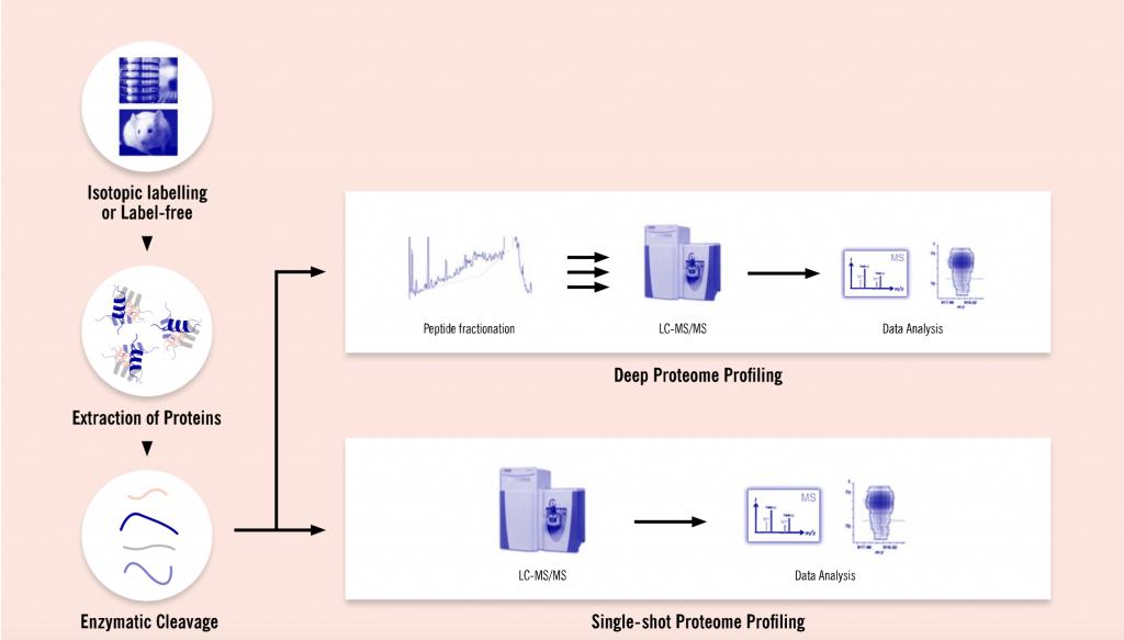 Evotec, Proteome analysis workflow